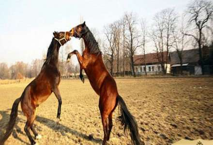 Dvůr Olšiny - jezdecký oddíl