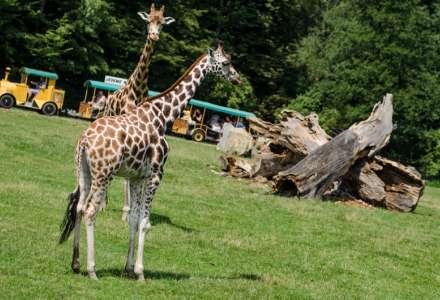Letní sezona v Safari Zoo Ostrava
