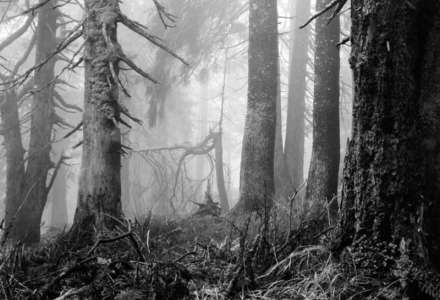 Mýtus lesa: Arnošt Hrabal