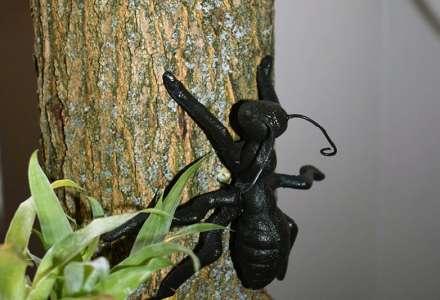 Výstava Mravenčení aneb Velmi křehké vztahy