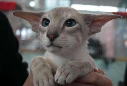 Mezinárodní výstava koček - ZRUŠENO