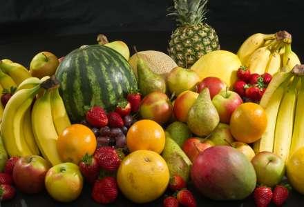 Výstava ovoce, zeleniny, květin, kaktusů a hobby