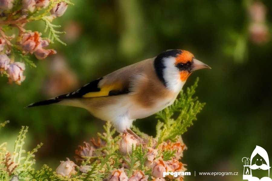 Den ptactva