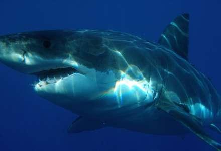 Národní žraločí týden