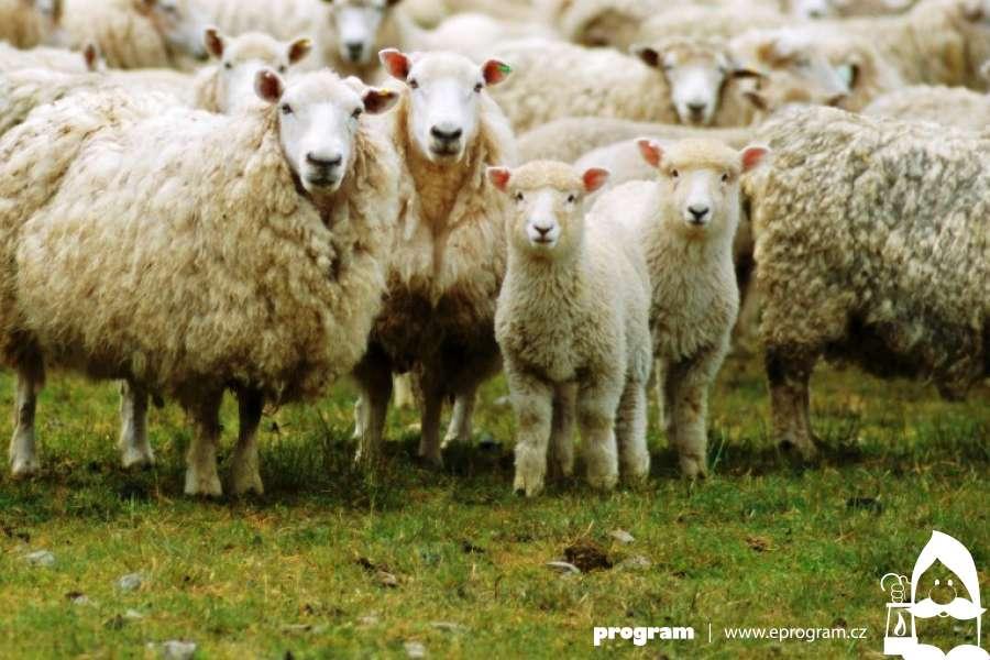 #Kultura on-line: O ovcích a salaších (nejen) na Radhošti