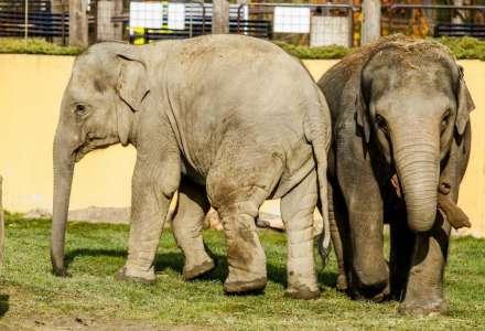 Den pro slony v Zoo Ostrava
