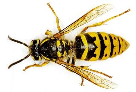 Společenský život hmyzu