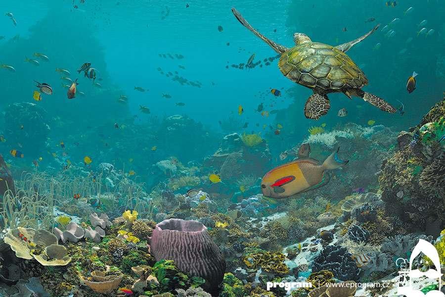 Svět korálových útesů