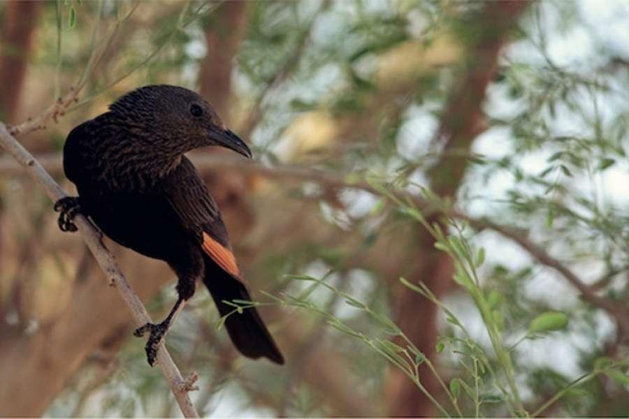 Izrael - ráj pro ornitology
