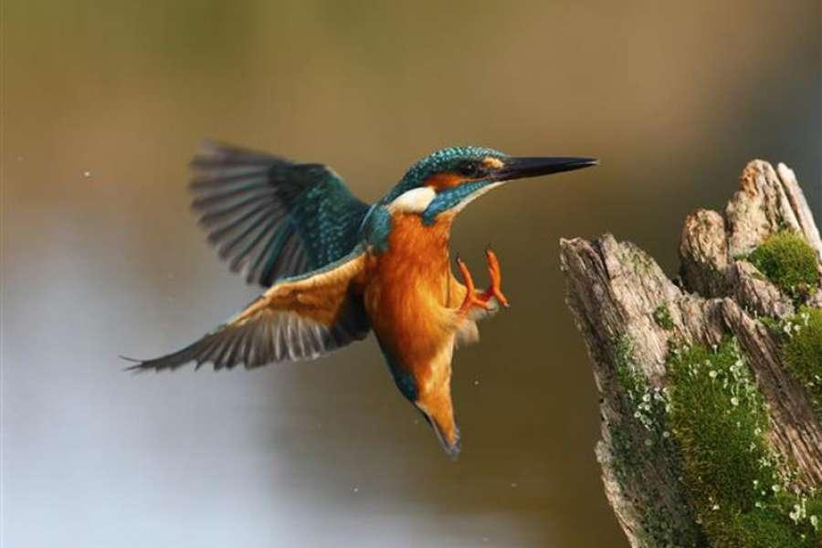 Den ptactva v Zoo Ostrava