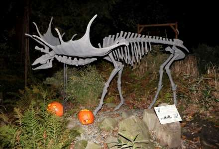 Halloween a lampionový průvod v ostravské zoo