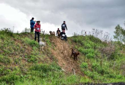 Mazlíkiáda 2020 - charitativní psí závod v Ostravě se uskuteční už tuto sobotu!