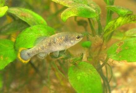 Zoo má nové akvárium s vzácnými mexickými rybami