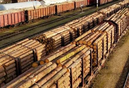 Česká republika dle odhadu přichází vývozem neopracovaného dřeva nízké přidané hodnoty o zhruba 60 miliard korun ročně. Ilustrační foto: Pixabay.com