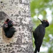 Vítání ptačího zpěvu nejen v korunách stromů