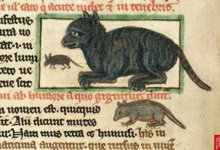 Byly kočky oblíbené ve středověku?