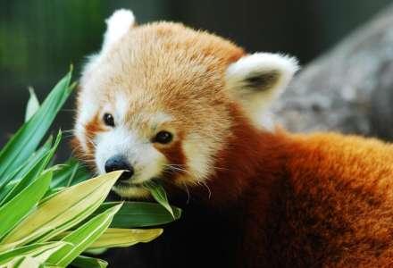 Zoo Ostrava opět otevřela své brány a spustila novou sbírku na podporu chodu zoo
