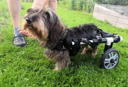 2.díl/ Rehabky pro tlapky: Jak pomoci psovi, který má problémy s páteří?