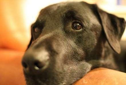 10 důvodů, proč je život se psem zdravější a šťastnější