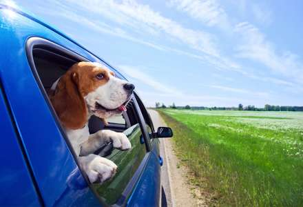 Nejen před cestou na dovolenou se vyplatí pojistit si psa nebo kočku