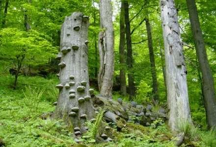 Do beskydského pralesa Mionší jen s průvodcem