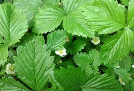 Plevel nebo bylinka? Začínáme se sběrem léčivých bylin