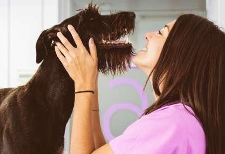 Nejlepší psí plemena pro alergiky, milovníky koček nebo sportovce