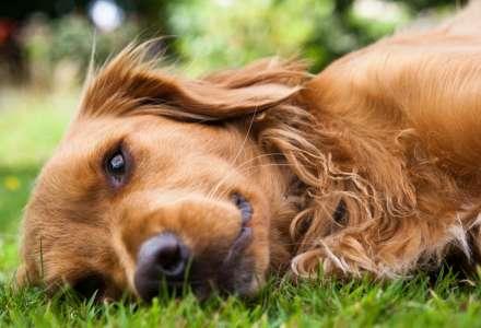 Nejčastější letní nástrahy, které číhají i na vašeho psa