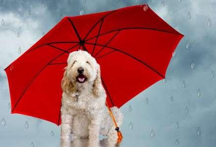 Opravdu dokáží zvířata předpovídat počasí?
