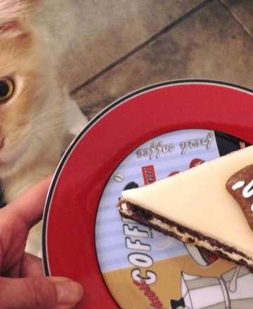 Kočky a lidé? Zamýšlí se majitelka kavárny Čauky mňauky cafe Dagmar Milatová