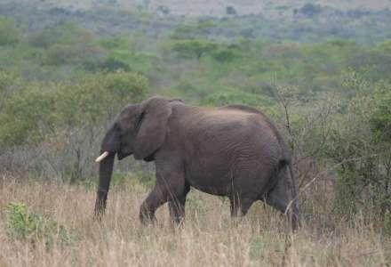 Den pro slony v Zoo Ostrava: přineste s sebou vysloužilý elektrospotřebič, pomůžete chránit slony