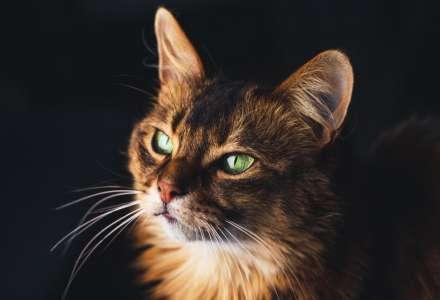 Proč vás kočka v noci neustále budí?