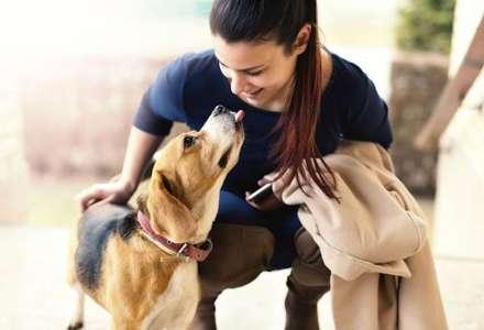 Jaké zdravotní výhody přináší vlastnictví psa