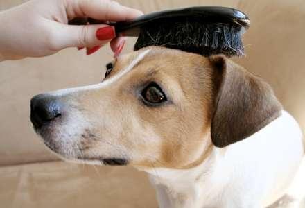 Kartáč, nebo hřeben? Co bude nejlepší pro péči o srst vašeho psa