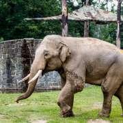 Slon Maxim nově v Ostravě