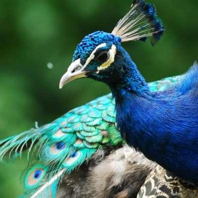 Zahájení večerních komentovaných prohlídek v Zoo Ostrava