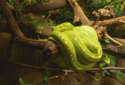 Krajty zelené v nové expozici v Zoo Ostrava