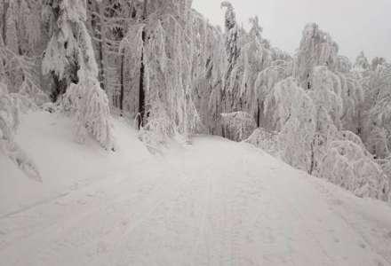Horská služba varuje před pohybem v lese