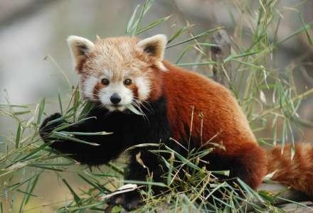 Jaro v Zoo Ostrava – zahájení komentovaných setkání