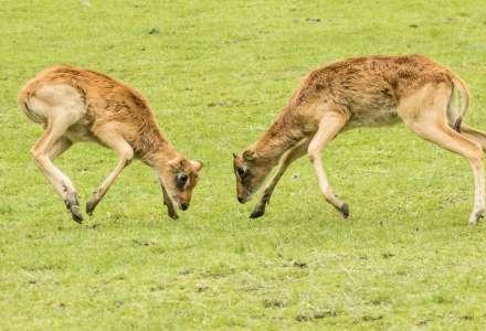 Provoz safari v ostravské zoo zahájen