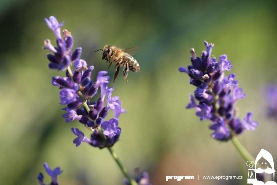 Den pro včely a medobraní v Zoo Ostrava