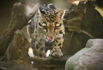 Večerní komentované prohlídky v ostravské zoo