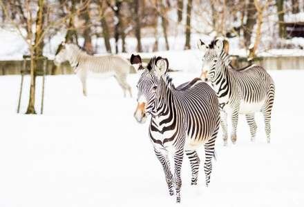 I zasněžená zoo je plná života